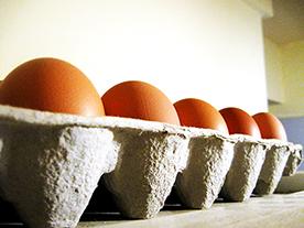 Egg carton full of eggs